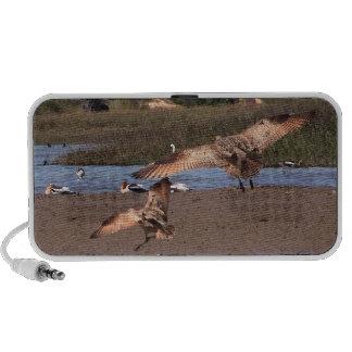 Shorebirds van het moerasland de Spreker van de Kr iPhone Luidsprekers