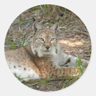 Siberische lynx 015 ronde sticker