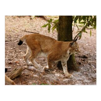 Siberische lynx 031 briefkaart