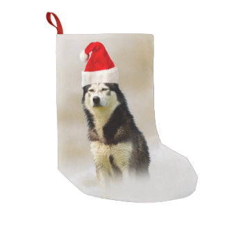 Siberische Schor Hond met het Pet van de Kerstman Kleine Kerstsok