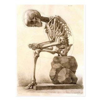 skelet briefkaart