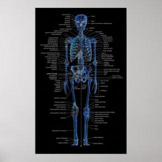 skelet poster