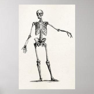 Skeletten van de Anatomie van het vintage Skelet Poster