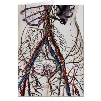 Slagaders, Aders, en Lymfatisch Systeem 4 Briefkaarten 0