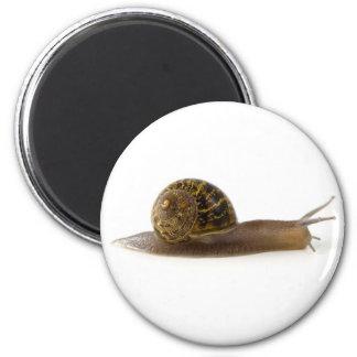 slak ronde magneet 5,7 cm