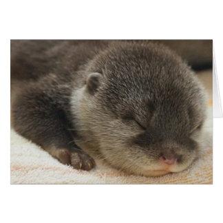 Slaperige Otter Wenskaart