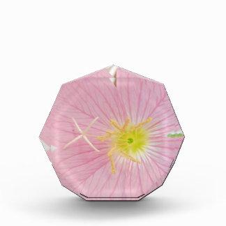 sleutelbloem roze prijs