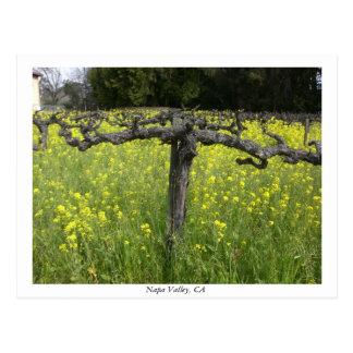 Sluimerende wijnstok - Vallei Napa Briefkaart