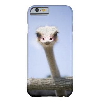 Sluit omhoog het hoofd van de Struisvogel Barely There iPhone 6 Hoesje