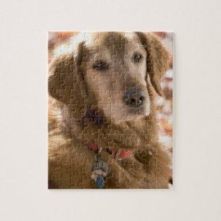 Sluit omhoog van gouden labrador retriever hond legpuzzel