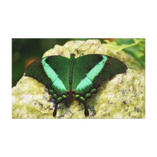 "Smaragdgroene Swallowtail Vlinder 20"" X12 "" Canvas Afdruk"