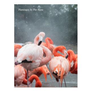 Smithsonian Flamingo's van   in de Sneeuw Briefkaart