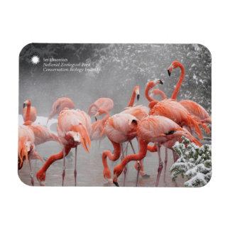 Smithsonian Flamingo's van   in de Sneeuw Magneet