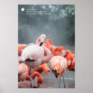 Smithsonian Flamingo's van   in de Sneeuw Poster