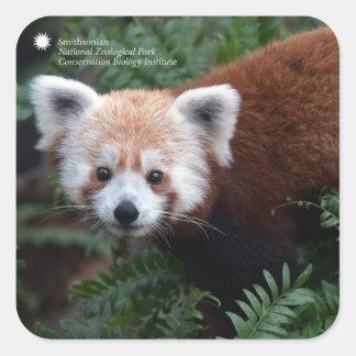 Smithsonian   Rode Panda Vierkante Sticker