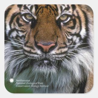 Smithsonian Tijger Sumatran Soyono van   Vierkante Sticker