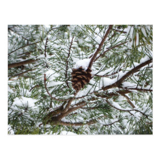 Sneeuw Denneappel II de Fotografie van de Natuur Briefkaart