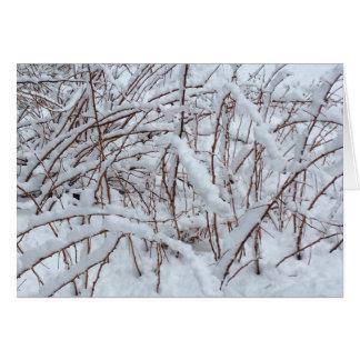 Sneeuw op een Flard van de Framboos --- Briefkaarten 0