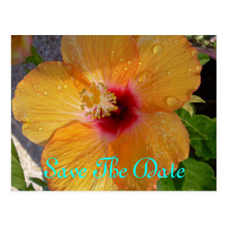 Sparen het Briefkaart van de Hibiscus van de Datum