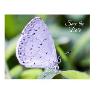 Sparen het Briefkaart van de Vlinder van de Lente
