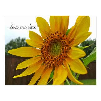 Sparen het briefkaart van de Zonnebloem van de