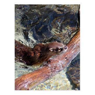 Speelse Otter Briefkaart