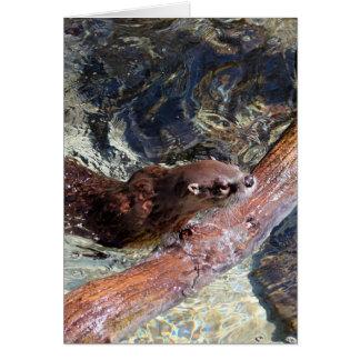 Speelse Otter Wenskaart