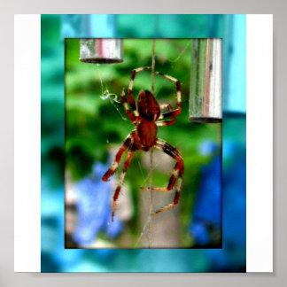 spinnen poster