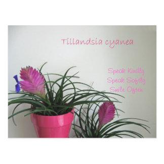 Spreek vriendelijk het Roze Briefkaart van de