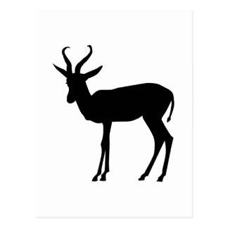 Springbok Briefkaart