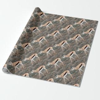 Springbok Inpakpapier