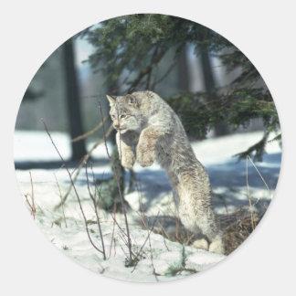 Springen van de lynx, die op sneeuw bounding ronde sticker
