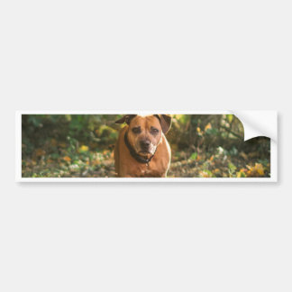 Staffordshire bull terrier bumpersticker