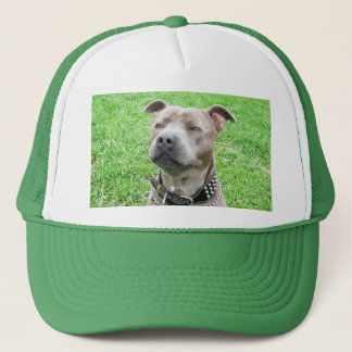 Staffordshire Bull terrier die zitten, Trucker Pet