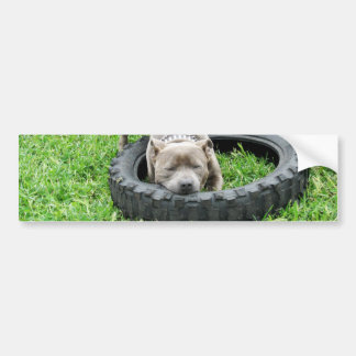 Staffordshire Bull terrier, Één Chomp, Bumpersticker