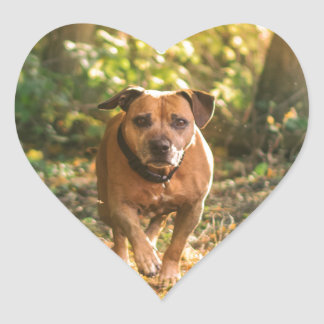 Staffordshire bull terrier hart sticker