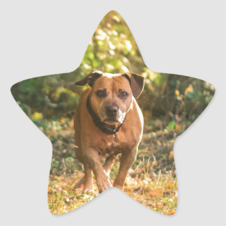 Staffordshire bull terrier ster sticker