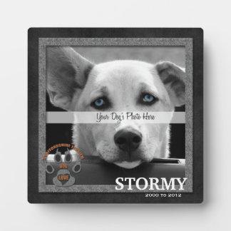 Staffordshire Terrier de HerdenkingsPlaque van het Fotoplaten