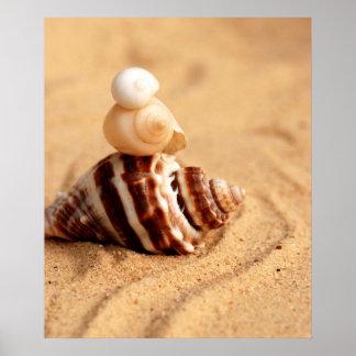 Stapel Mooie Shells van de Kroonslak Poster