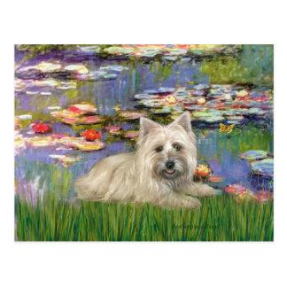 Steenhoop Terrier 4 - Lelies 2 Briefkaart