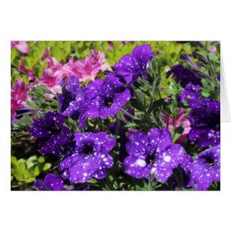 Sterrig de bloemwenskaart van de Petunia van de Kaart
