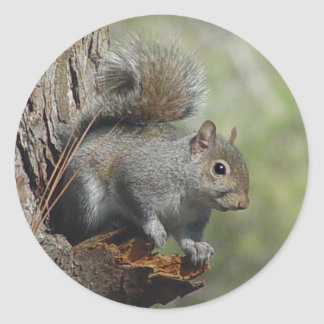 Sticker 2 van de eekhoorn