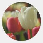 Sticker | Sticker Tulpen van tulpen