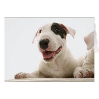 Stier Terriers Wenskaart