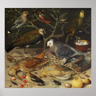 Stilleven van Vogels en Insecten, 1637 Poster