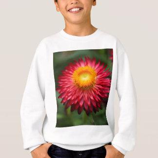 Strawflower (bracteatum Xerochrysum) Trui