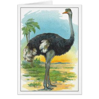 Struisvogel in Afrika Kaart