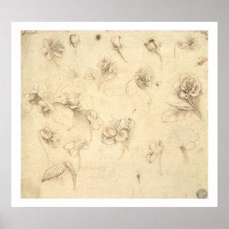 Studie van de Bloemen van gras-Gelijkaardig Plant  Poster