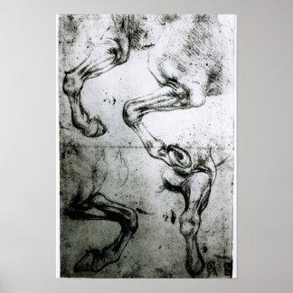 Studies van de benen van Paarden Poster
