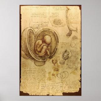 Studies van Embryo's Poster